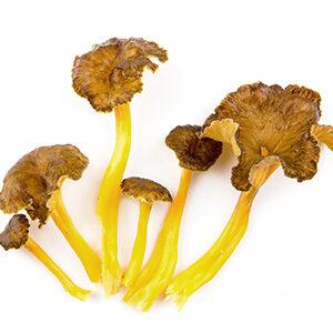 camagroc-setas-y-hongos